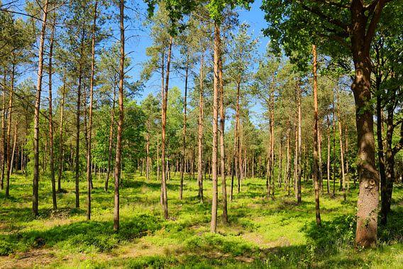 Sonniger Wald im Frühling