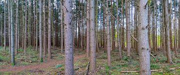 Bäume bei Anna's Hoeve in Hilversum von didier de borle