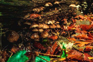 De kleuren van de herfst van Buis Photography