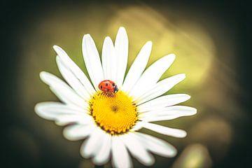 LadyBug van William Klerx