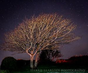 sterrennacht van