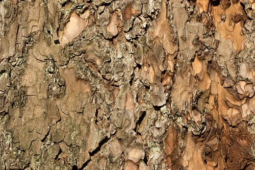 Boomschors houtdecor van