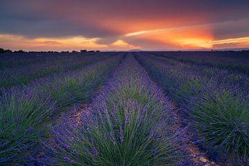 Lavendel zonsondergang van Martijn Kort