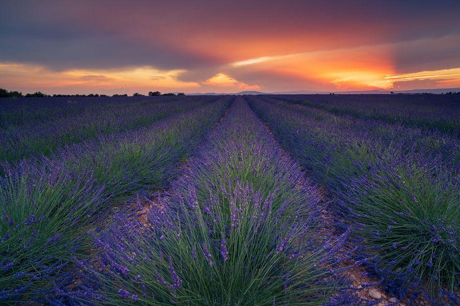 Lavendel zonsondergang