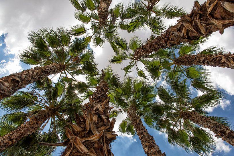 palmboom von Jan Pel