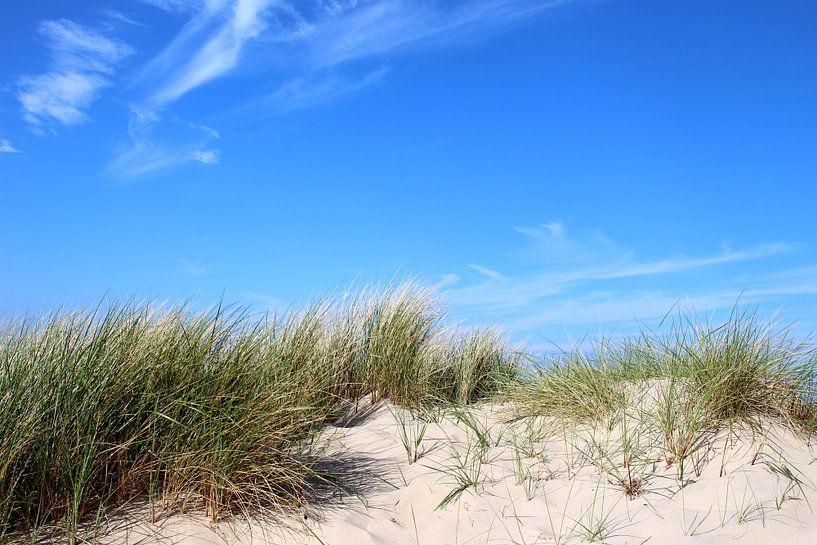 Dünen im Mai von Ostsee Bilder