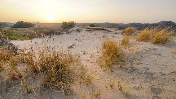 Plage et dunes hollandaises