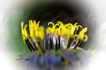 Secret floral sur Martine Affre Eisenlohr