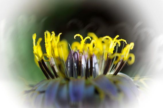 Secret floral van Martine Affre Eisenlohr