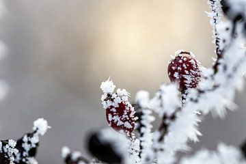 Bessen in de sneeuw van Martina David