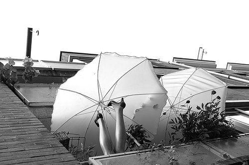 Amsterdamse paraplu