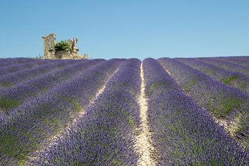 Kleine ruïnein lavendelveld van Jolanda van Eek