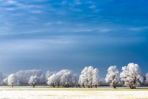 Magical Winter van