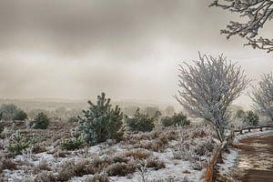 Winter in Salland