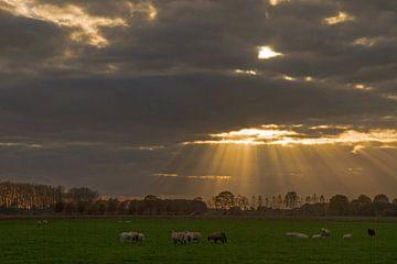 Zonneharp von Joop de Lange