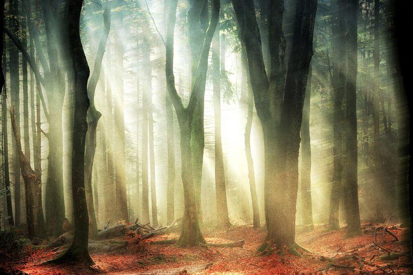 Dissolving Woods van Lars van de Goor
