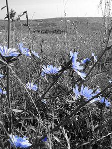 black & white bloemen von Wilma Rigo