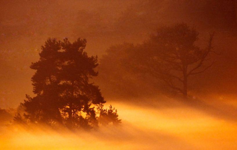 Worthrheder heide in de ochtendnevel van Ronald Jansen