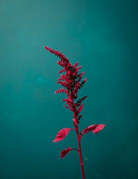 bloemstilleven kleur van Martha Olech