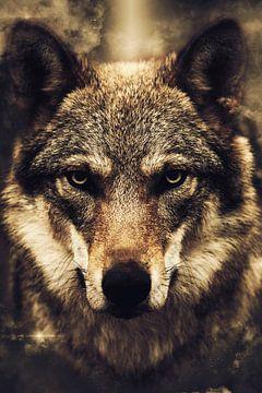 Wolf von Mateo