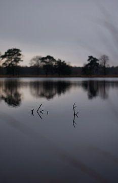 Water van Tanja Huizinga Fotografie