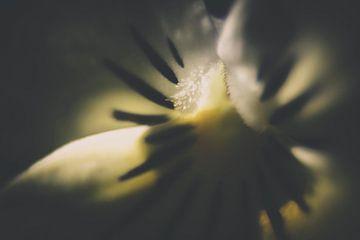 Macro van een tulp von Kees van der Rest