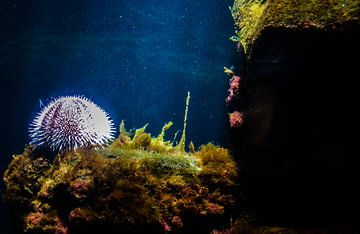Onderwater wereld / underwater world sur melissa demeunier