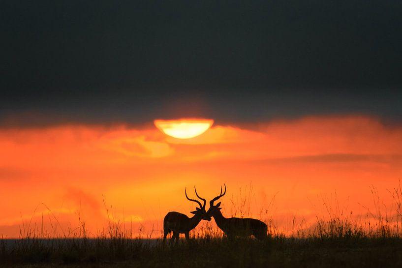 forever friends (gazelles) van jowan iven