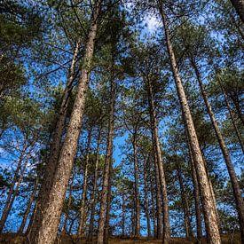 Hohe Bäume von Martijn Tilroe