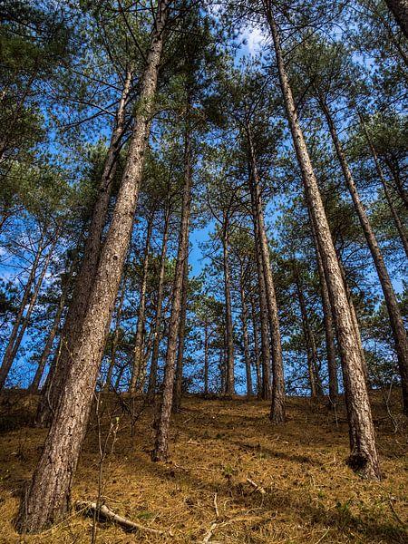 Lange bomen van Martijn Tilroe