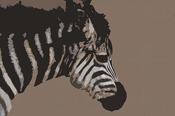 Baby zebra van De Afrika Specialist