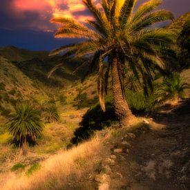 Palme mit Abendrot auf La Gomera von Max Steinwald