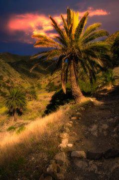 Palme mit Abendrot auf La Gomera