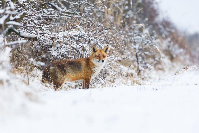 winter van Pim Leijen