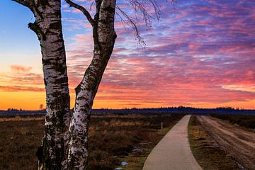 Ginkelse Heide - Road to Sunset van Joram Janssen