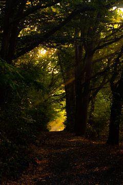 Zonnestralen door de bomen van Nynke Altenburg