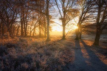 Warm ochtendlicht van de zonsopkomst verlicht het winter landschap op het Nationaal park Dwingelderv van Bas Meelker