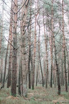 Den Wald vor lauter Bäumen nicht sehen von Mascha Looije