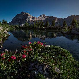 Quand l'été arrive dans les Dolomites sur Thomas Weber