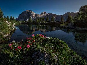 Wenn der Sommer in den Dolomiten ankommt