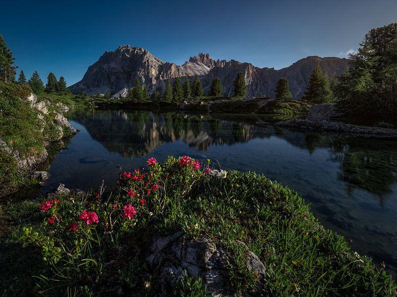 Wenn der Sommer in den Dolomiten ankommt von Thomas Weber