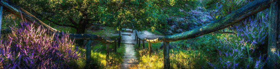 wandelpad door de nationaal park Veluwezoom