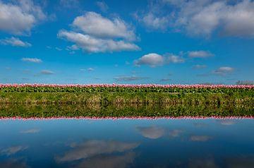 Mooie tulpenveld op een zonnige lentedag met reflectie in het water van Chihong