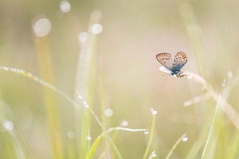 Heideblauwtje in het gras van Erik Veldkamp