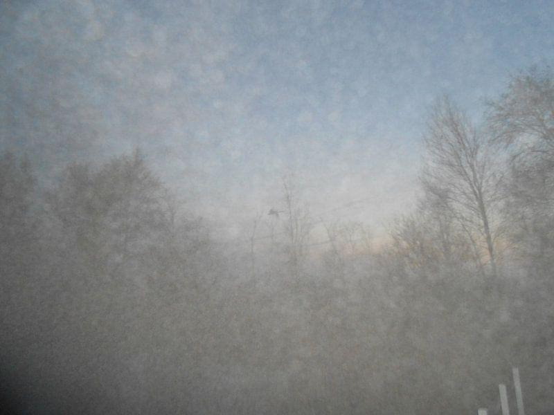 Mist van Sabine Trines