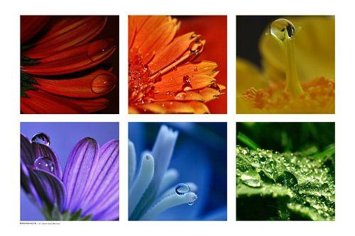 Collage - Dropshots