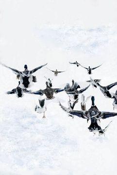 Bild von Enten, die im Schnee davonfliegen. von Therese Brals