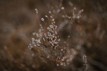 Heideblumen in den Niederlanden von Eke Salomé