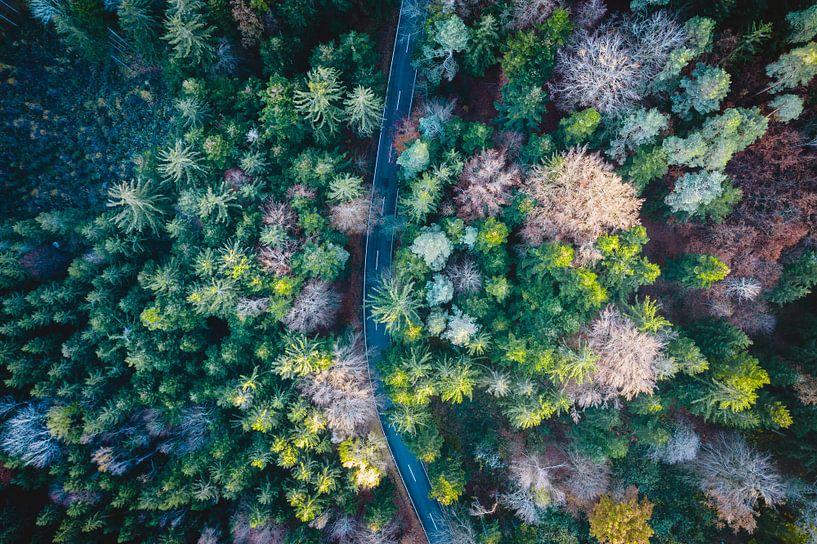 Luchtfoto van de weg tussen bos en bomen van Thilo Wagner
