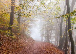 Herfst in Frahan